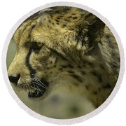 Cheetah On The Prowl Round Beach Towel