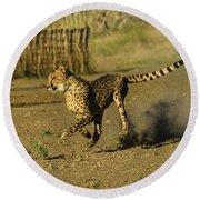 Cheetah On The Run Round Beach Towel