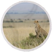 Cheetah Perched On A Mound Round Beach Towel