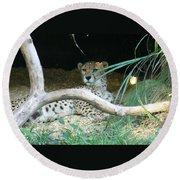 Cheetah Resting  Round Beach Towel