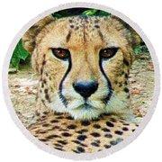 Cheetah Stare L Round Beach Towel
