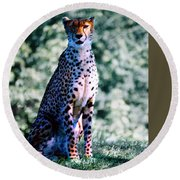 Cheetah Round Beach Towel