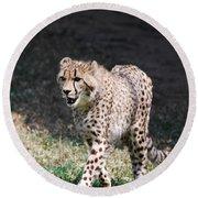 Cheetah Strutting Round Beach Towel