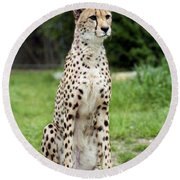 Cheetah's 01 Round Beach Towel