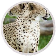 Cheetah's 04 Round Beach Towel