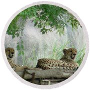 Cheetahs-120 Round Beach Towel