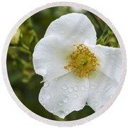 Cherokee Rose With Rain Drops Round Beach Towel