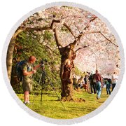 Cherry Blossoms 2013 - 009 Round Beach Towel