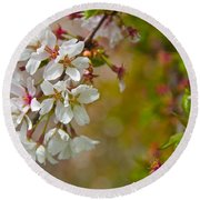 Cherry Blossoms Galore Round Beach Towel