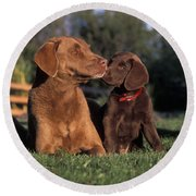 Chesapeake Bay Retrievers Round Beach Towel