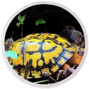 Chesapeake Box Turtle Round Beach Towel