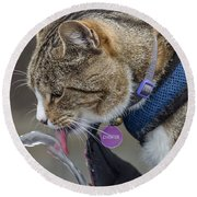Chester At The Drinking Fountain Round Beach Towel