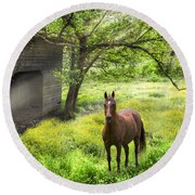Chestnut Horse In A Sunny Meadow Round Beach Towel