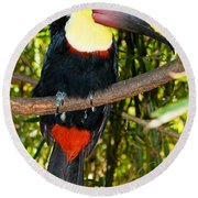 Chestnut Mandibled Toucan Round Beach Towel