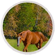 Chestnut Red Horse Round Beach Towel