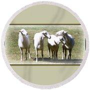 Cheviot Sheep 2 Round Beach Towel