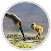 Chick At The Lake Round Beach Towel