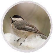 Chickadee In The Snow Round Beach Towel