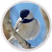 Chickadee On A Bright Day  Round Beach Towel