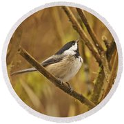 Chickadee On Alert Round Beach Towel