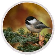 Chickadee Pictures 375 Round Beach Towel