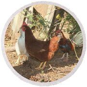 Chickens In The Pin Round Beach Towel