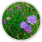 Chicory And Purple Vetch Along Rivier Du Nord Trail In Laurentians-quebec Round Beach Towel