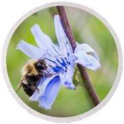 Chicory Bee Round Beach Towel