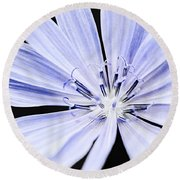 Chicory Flower Macro Round Beach Towel