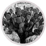 Chihuahua Desert Cactus Bw Round Beach Towel