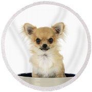 Chihuahua Dog In Bowl Round Beach Towel