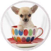 Chihuahua In Cup Dp684 Round Beach Towel by Greg Cuddiford
