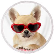 Chihuahua In Heart Sunglasses Dp813 Round Beach Towel by Greg Cuddiford