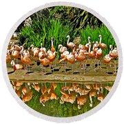 Chilean Flamingo Reflection In San Diego Zoo Safari Park In Escondido-california Round Beach Towel
