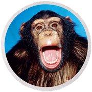 Chimpanzee Portrait Round Beach Towel