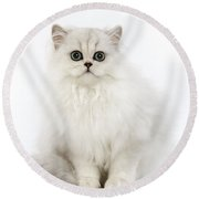 Chinchilla Persian Kitten Round Beach Towel