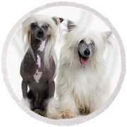Chinese Crested Dogs Round Beach Towel