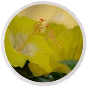 Chinese Rose Duo Round Beach Towel