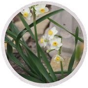 Chinese Sacred Lily Round Beach Towel