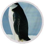 Chinstrap Penguin Round Beach Towel