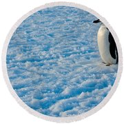 Chinstrap Penguin Round Beach Towel