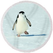 Chinstrap Penguin Running Round Beach Towel