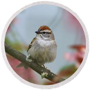 Chipping Sparrow In Blossoms Round Beach Towel by Deborah Benoit
