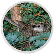 Chipping Sparrow On Nest Round Beach Towel
