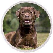 Chocolate Labrador Dog Round Beach Towel