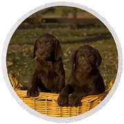 Chocolate Labrador Retriever Pups Round Beach Towel
