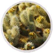 Cholla Cactus Garden Mirage Round Beach Towel