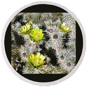 Cholla Flowers Round Beach Towel