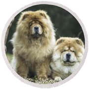 Chow Chow Dogs Round Beach Towel