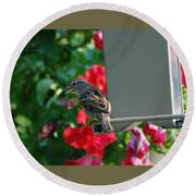 Chow Time At The Bird Feeder Round Beach Towel
